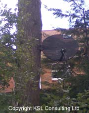 Sky dish installation on tree!